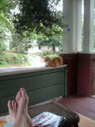 PorchKitty